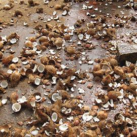 Coconut Smashing Ritual on 4th Waning Moon