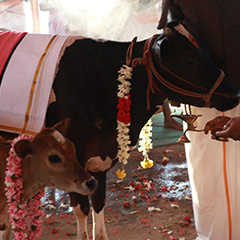 Cow Nutritional Support 6 Month Program