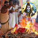 Elite Soma Pradosham Ceremony