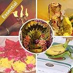 Naga Chaturthi and Naga Panchami Essential Package 2019