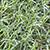 Druva Grass