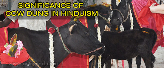significance-of-cow-dung-in-hinduism