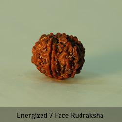 Energized-7-Face-Rudraksha