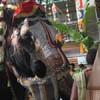 royalty-rituals-on-akshaya-tritiya-for-ever-increasing-wealth-small