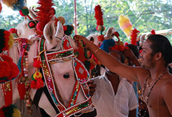 4 Ashwa (Horse) Pooja (for 12 days)