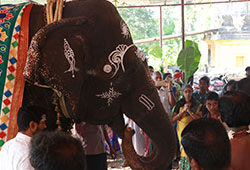 2 Gaja (Elephant) Pooja (for 12 days)