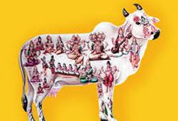 Kamadhenu Pooja