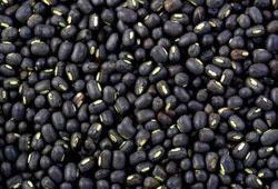 Donation of Black Urad Dhal
