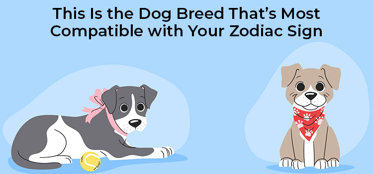 This Is the Dog Breed Thats Most Compatible with Your